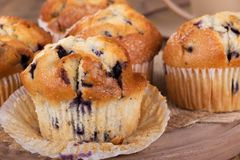 Blueberry Muffin Closeup Royalty Free Stock Image