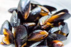 Closeup blueshell mussels in white wine sauce on white background Royalty Free Stock Photo