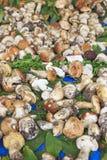 Closeup of Boletus Edulis mushrooms, Truffle fair Moncalvo Italy Stock Images