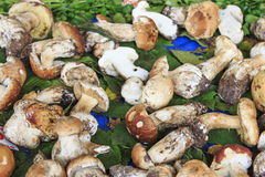 Closeup of Boletus Edulis mushrooms, Truffle fair Moncalvo Italy Stock Photography