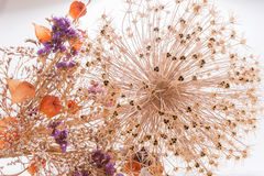Closeup bouquet of dried flowers Stock Photos