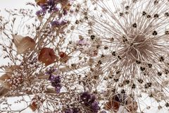Closeup bouquet of dried flowers Royalty Free Stock Photo