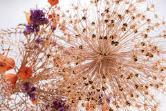 Closeup bouquet of dried flowers Stock Photo