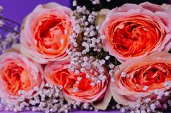 Closeup of a bouquet of roses of coral color stock photo