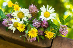 A closeup bouquet of wildflowers, bokeh background Stock Photo