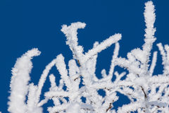Closeup of branches of a snow winter tree Royalty Free Stock Images