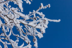 Closeup of branches of a snow winter tree Stock Photo