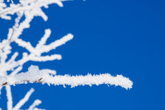 Closeup of branches of a snow winter tree Royalty Free Stock Photography