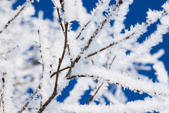 Closeup of branches of a snow winter tree Stock Images