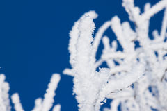 Closeup of branches of a snow winter tree Stock Image