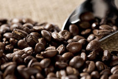 Closeup on brazilian coffee beans Stock Images