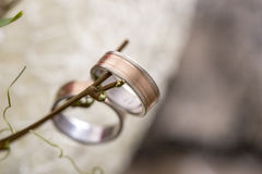 Closeup of bride and groom wedding rings hanging from a twig Stock Image