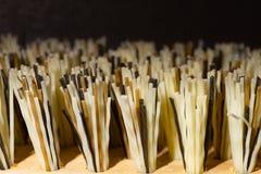 Closeup of bristles on edge of brush. Pattern texture and profile of bristles on edge of brush with blurred background stock photo