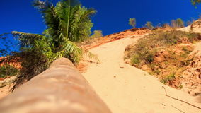 Closeup Broken Palm Trunk Lies in Fairy Stream Park stock video footage