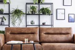 Closeup of brow leather sofa in luxury living room. Water, book and candle on the table next to it. Pots with green plant behind it stock photography