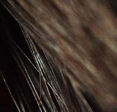 Closeup of Brown Cat Hair with Blur Royalty Free Stock Photography