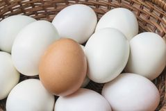 Closeup brown chicken egg on pile of white duck egg on wood basket background Royalty Free Stock Photos