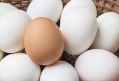 Closeup brown chicken egg on pile of white duck egg on wood basket background Stock Photo