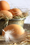 Closeup of brown eggs with straw Stock Image