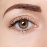 Closeup of brown eye. Beautiful macro image of female eye with makeup. Perfect shape of eyebrow. Cosmetics and make-up. Fashion natural eye visage. Hazel eye Royalty Free Stock Image