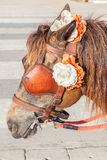 Closeup brown harness with flower decoration on pony for tou Royalty Free Stock Image