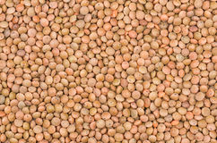 Closeup brown lentils texture Royalty Free Stock Photo