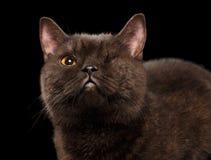 Closeup Brown One-Eyed Cat on Black Stock Photos