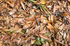 Full screen image with fallen leaves and twigs. Closeup of brown and orange colored oblong leaves and small twigs together on large heap. The organic material stock images