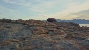 Closeup brown stone on beach against cloudy blue sky stock footage