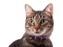 Closeup of a brown tabby cat looking to the left of the viewer Stock Images