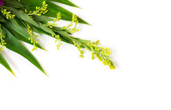 Closeup buddhist Flower offerings Stock Photo