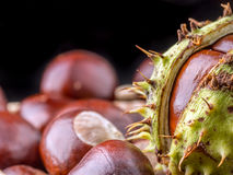 Closeup of bunch of chestnuts Stock Photos