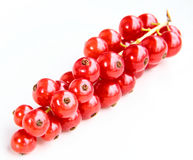 Closeup of a bunch of delicate and fresh redcurrants Stock Photos