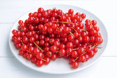 Closeup of a bunch of delicate and fresh redcurrants Royalty Free Stock Photos