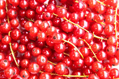 Closeup of a bunch of delicate and fresh redcurrants Stock Image