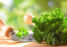 Fresh crinkly leaf parsley Stock Photo
