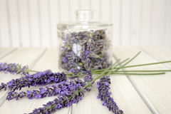 Closeup of bunch of lavender Royalty Free Stock Photo