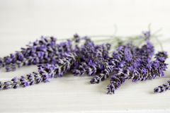 Closeup of bunch of lavender Stock Image