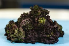 Closeup of a bunch of raw kale against. Blurred background Stock Image