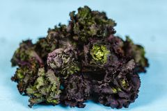 Closeup of a bunch of raw kale against. Blurred background Stock Photography