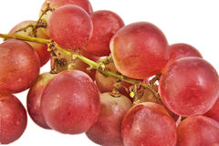 Closeup bunch of red grapes on white background. Stock Images