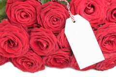 Closeup of blank card with roses Stock Image
