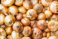 Closeup of the bunch, ripe, onion captured the market for fruits Royalty Free Stock Photos