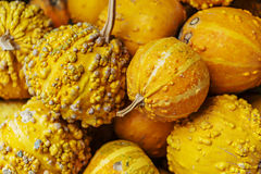 Closeup, of a bunch of ripe small pumpkins captured the market fo stock images