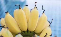 Closeup bunch of yellow cultivated bananas Stock Photo