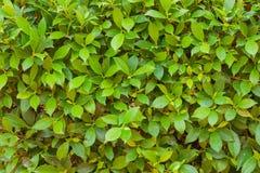 Closeup bush in park Stock Photography