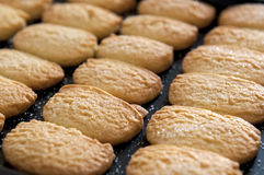 Closeup of butter cookies on baking tray shot at selective focus. Royalty Free Stock Images