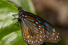 Closeup of a Butterfly Royalty Free Stock Photography