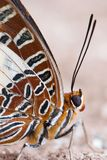 Closeup of a butterfly Royalty Free Stock Photos