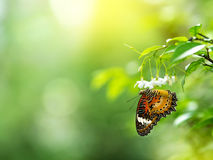 Closeup butterfly Stock Images